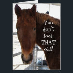 """Funny Birthday Compliment TWH Horse Western Card<br><div class=""""desc"""">Funny Western &quot;over the hill&quot; birthday wishes. Sweet face of a sorrel red Tennessee Walking Horse on cover. Cover text reads YOU DON&#39;T LOOK THAT OLD! Inside text reads AND THAT&#39;S STRAIGHT FROM THE HORSE&#39;S MOUTH! HAPPY BIRTHDAY! NOW LET&#39;S SEE SOME ID! Personalize or customize. A slice of country living,...</div>"""