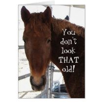 Funny Birthday Compliment TWH Horse Western Card