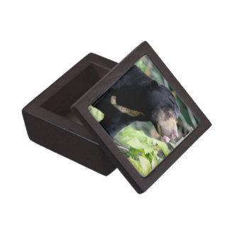 Funny Black Bear Premium Black Bear Premium Gift Boxes