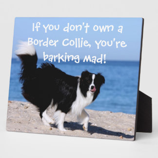 Funny Border Collie plaque