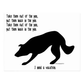 Funny border collie post card