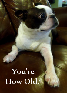 Funny animal cards greeting photo cards zazzle funny boston terrier birthday card animal rescue m4hsunfo