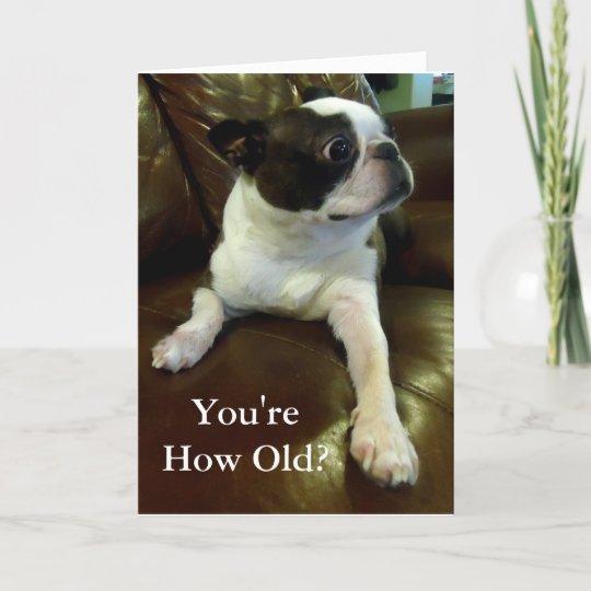 Funny Boston Terrier Birthday Card Animal Rescue Zazzle