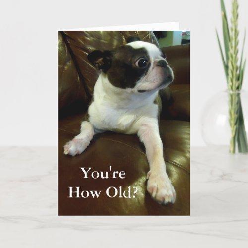 Funny Boston Terrier Birthday Card Animal Rescue