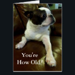 """Funny Boston Terrier Birthday Card (Animal Rescue)<br><div class=""""desc"""">This card features an adorable Boston Terrier who is comically shocked at finding out your age and would be perfect for anyone in need of a funny birthday card or even just a daily dose of cute. Additionally, 5% of the royalties from each sale are donated to animal rescue, so...</div>"""