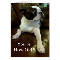 Funny Boston Terrier Birthday Card (Animal Rescue)