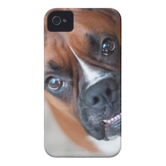Funny boxer dog iPhone 4 case