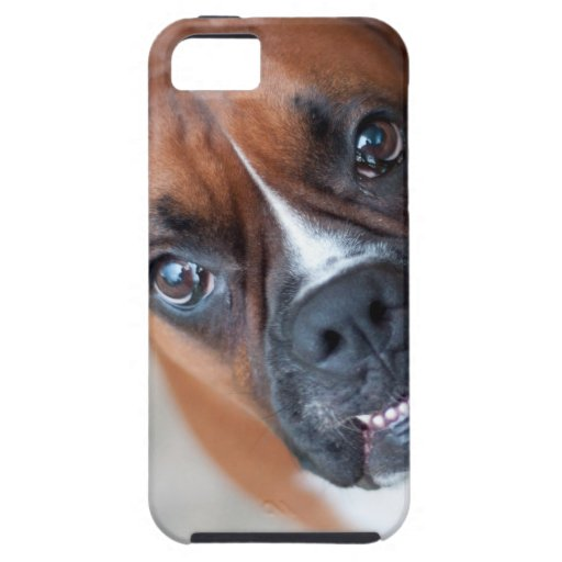 Funny boxer dog iPhone 5 cover