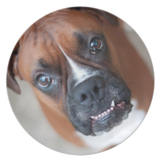 Funny boxer dog party plates