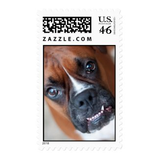Funny boxer dog stamps