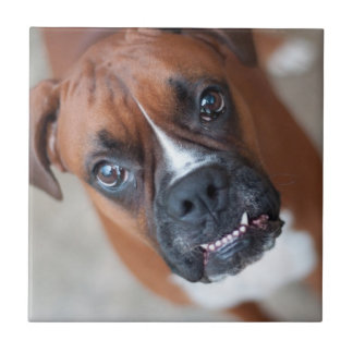 Funny boxer dog small square tile