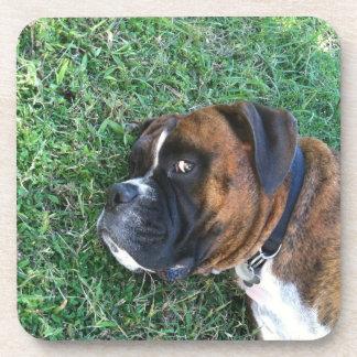 Funny Brindle Boxer Dog Coasters