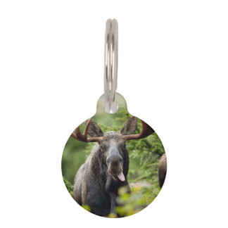 Funny Bull Moose Pet ID Tag