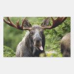 Funny Bull Moose Rectangular Sticker