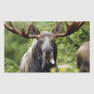 Funny Bull Moose Rectangular Sticker