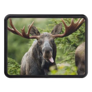 Funny Bull Moose Tow Hitch Cover