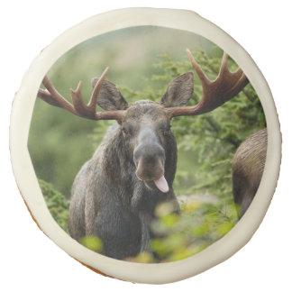 Funny Bull Moose Sugar Cookie