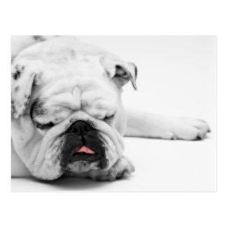 Funny BullDog Dog Tired Postcard