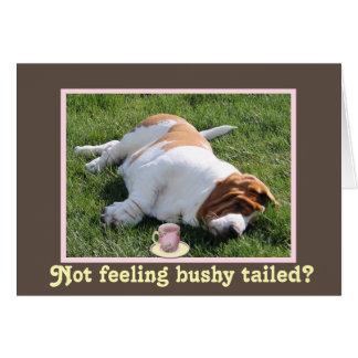 "Funny Bushy Tailed ""Get Well"" Card w/Basset Hound"