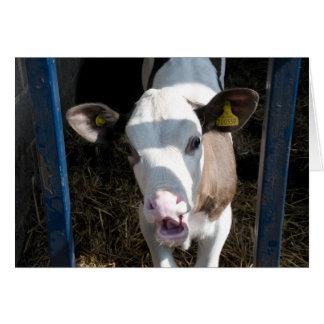 Funny Calf Card