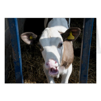 Funny Calf Greeting Cards