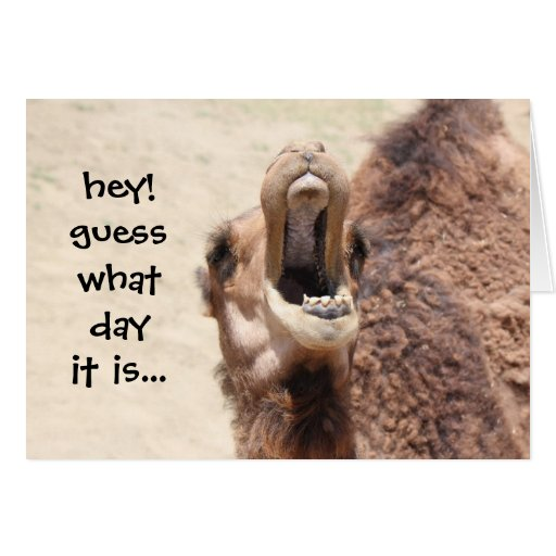 Funny Camel Hump Day Birthday Card