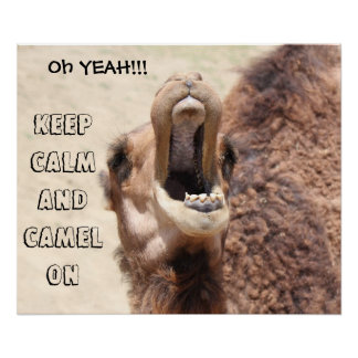Funny Camel Poster Keep Calm and Camel On
