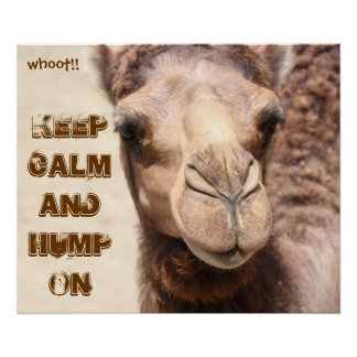 Funny Camel Poster Keep Calm and Hump On (whoot!)
