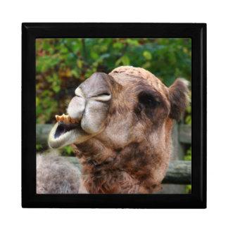 Funny Camel Wildlife Animal Photo Trinket Box