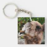 Funny Camel Wildlife Animal Photo Acrylic Key Chains