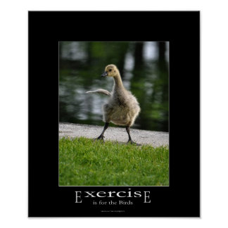 Funny Canada Goose Gosling Exercise Demotivational Poster