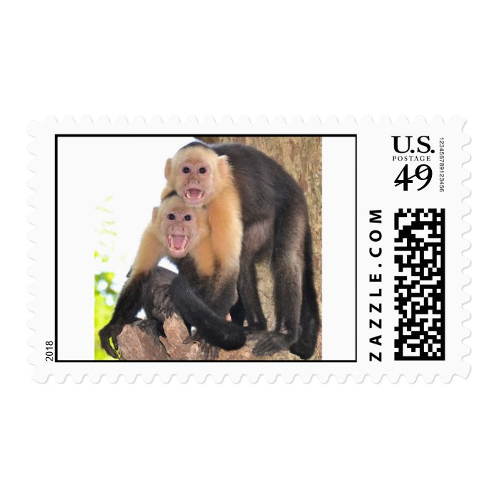 Funny Capuchin Monkeys postage stamp