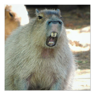 """Funny Capybara  Invitations 5.25"""" Square Invitation Card"""