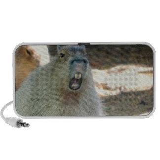 Funny Capybara  Portable Speakers