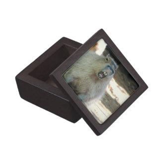 Funny Capybara Premium Gift Box