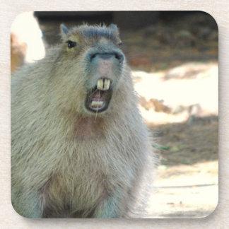 Funny Capybara Set of Six Coasters