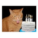 Funny cat birthday postcard