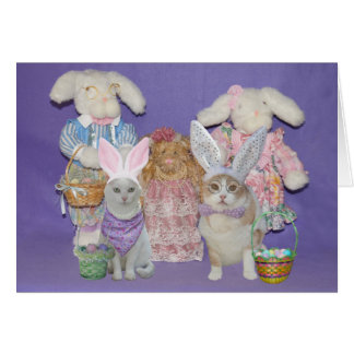 Funny Cat Bunnies Easter Card