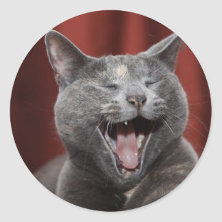 Funny cat classic round sticker