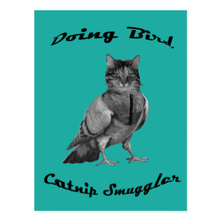 funny Cat doing Bird Postcard