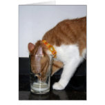 Funny Cat Drinking from Glass Blank Note Card