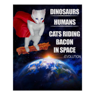 Funny Cat: Evolution Poster at Zazzle