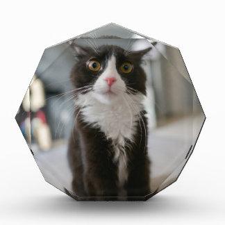 Funny Cat Face Acrylic Award