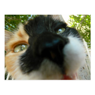 Funny cat face close up photo postcard