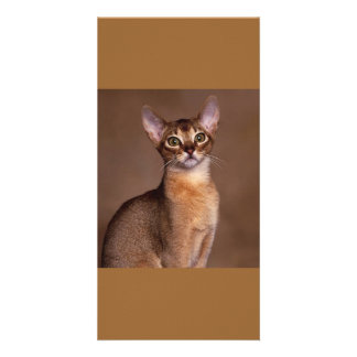 funny_cat_facial_expression_13 photo card