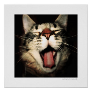 Funny Cat Fun Tongue Out Kitten Cool Poster Prints