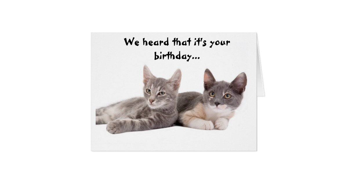 Funny Cat Birthday Cards Greeting Photo Cards – Humorous Cat Birthday Cards