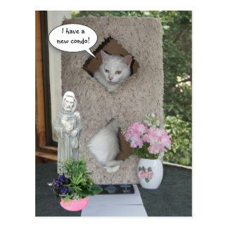 Funny Cat/ I've Moved/New Address Postcard