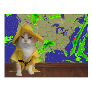 Funny Cat/Kitty Weatherman in Yellow Slicker Postcard