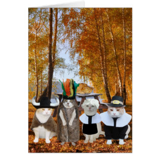 Funny Cat Lover Thanksgiving Card at Zazzle